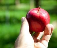 Por que sofremos tentações? Todas as pessoas são tentadas?