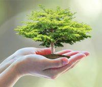 Respeito ao Meio Ambiente e Responsabilidade Social também são preocupações da Festa da Divina Misericórdia