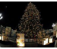 Inaugurado presépio e árvore da Praça São Pedro