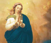 Infográfico: Nossa Senhora da Imaculada Conceição