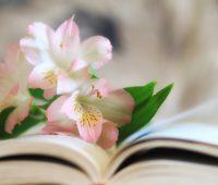 O amor de Deus é a flor, e a misericórdia, o fruto