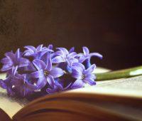 Louvores à misericórdia – O amor de Deus é a flor, e a misericórdia, o fruto