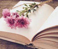 Louvores à misericórdia: O amor de Deus é a flor, e a misericórdia, o fruto
